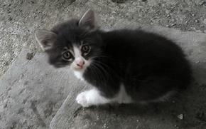 Картинка котенок, испуг, милый, красивый