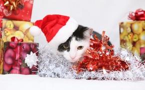 Картинка кошка, кот, подарки, Новый год, котёнок, мишура, колпак, коробки