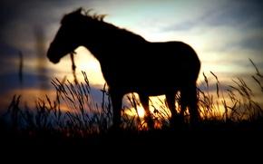 Картинка солнце, закат, лошадь, размытие, силуэт