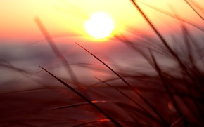 Картинка зелень, трава, солнце, макро, закат, природа, фон