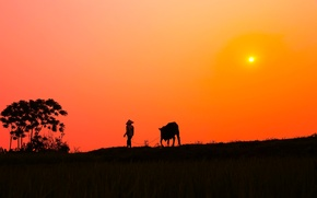 Обои оранжевое небо, корова, деревня, мужчина, силуэт, куст, солнечный, закат