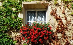 Картинка цветы, растения, Окно, Italy, flowers, Italia, finestra