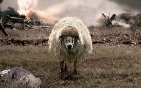 Обои война, каска, Овца