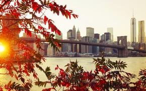 Картинка осень, листья, мост, город, Brooklyn, New York