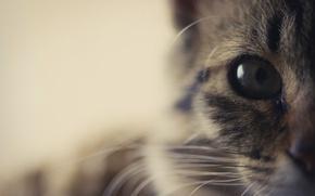 Обои кошка, взгляд, глаз