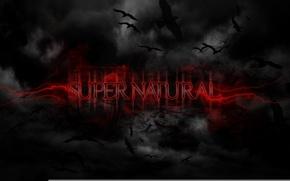 Обои птицы, фон, черный, сверхъестественное, supernatural