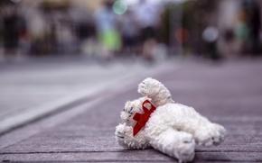 Картинка медведь, плюшевый, уронили, мишку, на пол