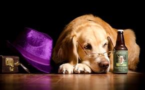 Картинка шляпа, очки, бутылка, лежит, на полу, чемодан, Ретривер, юмор