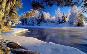 Картинка холод, лед, зима, иней