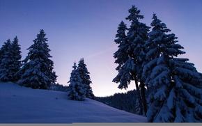 Обои зима, деревья, ночь