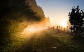 Картинка изгородь, туман утром, дорога в даль