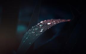 Картинка трава, капли, темный фон, дождь, dobraatebe