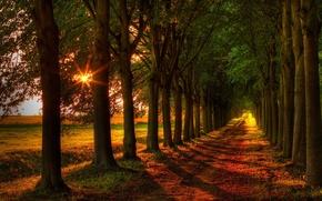 Картинка дорога, leaves, fall, листья, path, colors, trees, поле, walk, осень, лес, forest, природа, деревья, autumn, ...