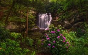 Картинка лес, деревья, скалы, водопад, North Carolina, Северная Каролина, рододендроны, Этова, Seven Falls, Etowah