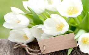 Картинка цветы, букет, тюльпаны, white, flowers