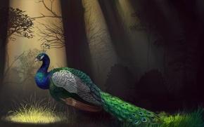 Картинка деревья, птица, перья, арт, профиль, павлин