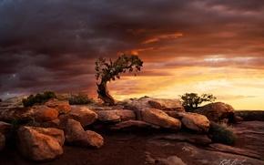 Картинка небо, тучи, камни, дерево, скалы