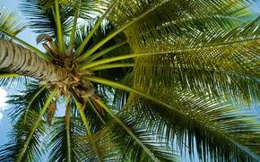 Обои небо, пальма, листья