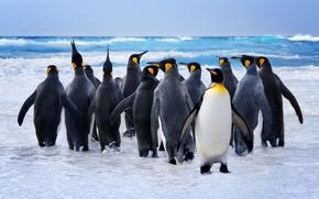 Обои купание, птицы, вода, пингвины