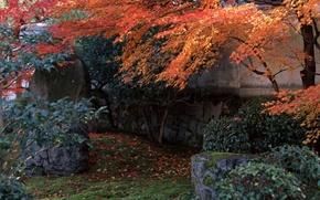 Япония сад мост ручей лужайка обои
