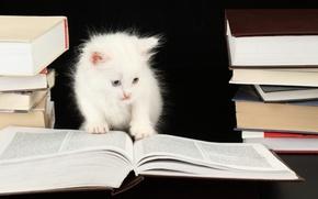 Картинка котенок, книги, kitten, kitty, book, кошечка, white smart cat, белый умные кошки, books