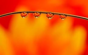 Картинка капли, макро, macro, orange, Drops