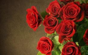 Картинка цветы, розы, красные, red, flowers, roses