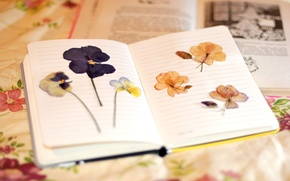 Картинка листья, цветы, фон, обои, блокнот, цветочки, разное, wallpapers, тетрадка, гербарий