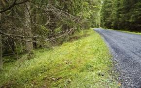 Картинка дорога, лес, ветки