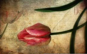 Картинка письмо, стиль, фон, тюльпан