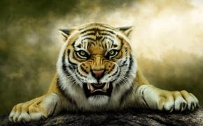 Картинка тигр, хищник, оскал, Photoshop, Нelena