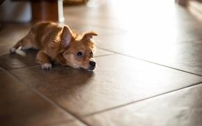 Картинка собака, дом, пол
