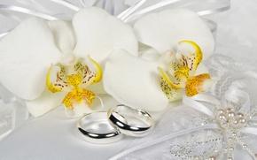 Картинка цветы, кольцо, кружева, белые, орхидеи, бант, Orchid, Jewelry, Ring