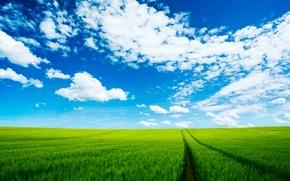 Обои дорога, небо, поле, облака
