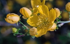 Картинка макро, желтый, лепестки
