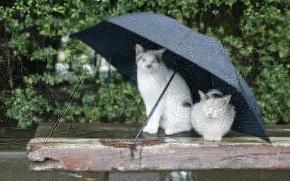 Обои зонт, дождь, кошки
