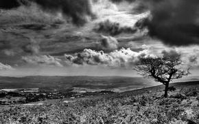 Картинка дерево, черно-белая, Облака