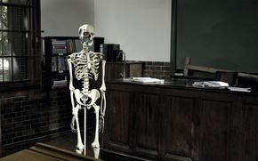 Обои класс, скелет, терминатор