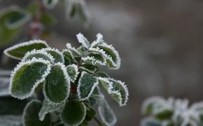Картинка холод, зима, иней, макро, снег, природа, фон, обои, растение, мороз, листочки