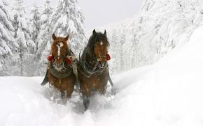 Картинка зима, снег, деревья, лошади, сугробы, сани, красивые, глубокие, Winter sledge