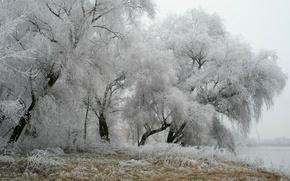 Картинка зима, иней, деревья, парк, Германия