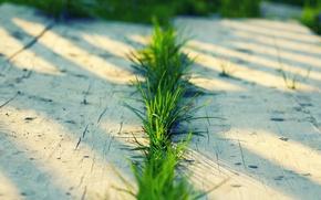 Картинка зелень, лето, трава, макро, доски, grass