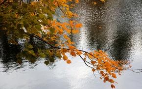 Картинка осень, листья, вода, озеро, ветка