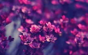 Обои макро, цветы, фото, сиреневый