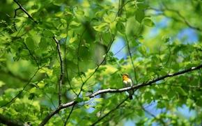 Картинка лес, ветки, дерево, птица, листва