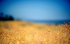 Обои поле, природа, растение, Небо