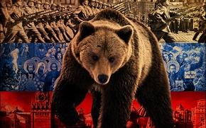 Обои флаг, медведь, Россия, политика
