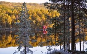 Обои осень, лес, деревья, отражение, река, берег, Норвегия, домик, forest, хвоя, autumn, Norway