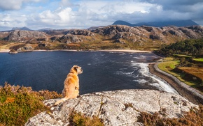 Картинка море, пляж, облака, горы, скала, собака, rock, beach, рок, sea, dog, mountains, clouds, cliff