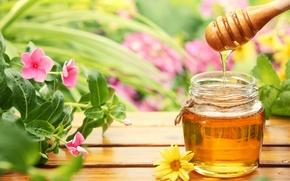 Обои цветы, стол, деревянная, мед, баночка, ложка